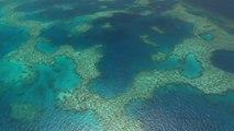 Sciences - Faire revivre la grande barrière de corail