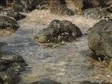 Las medusas se adueñan de las playas canarias