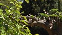 Abren sus puertas al público los jardines del Palacio de Marivent en Palma