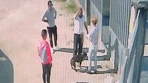 Abandonan en una protectora a un animal con heridas sospechosas de haber participado en peleas de perros