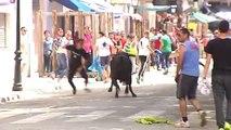 Beas del Segura (Jaén) celebra sus tradicionales toros ensogaos