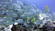Parc National Maritime des îles Similan avec thailand diving pattaya