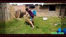 Troleando cabras y Ovejas - Cabras Y Ovejas Locas #2