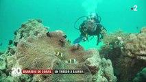 La grande barrière de corail, un trésor à sauver