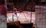 Un lion de cirque déchaîné attaque son maître devant une foule terrifiée