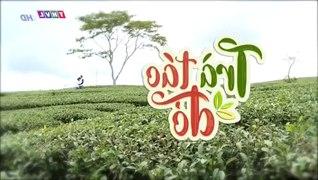 Tra Tao Do Tap 42 Ban Chuan Tap Cuoi Phim Viet Nam THVL1 Phi