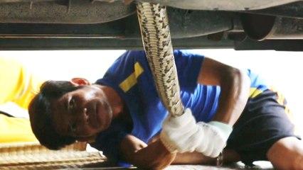 Man Finds Giant Python Under Truck Before Work