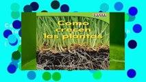 Como Crecen Las Plantas (How Plants Grow) (Spanish Version) (Emergent) (Time for Kids Nonfiction