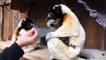 Le zoo de Mulhouse a sa nouvelle star