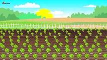 Farmer Works on farm   Tractor. Sugar betteraves   Agriculteur Travail sur le Rôle - machines agricoles Conte de la Betterave