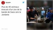 Bande de Gaza. Plus de 40 animaux évacués d'un zoo vers la Jordanie