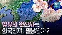 """[엠빅뉴스]  """"벚꽃 원산지는 어느 나라?"""" 한,일 벚나무 유전체를 분석했더니.."""