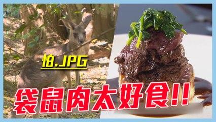 【袋鼠肉~媲美牛肉的稀奇野味?!】愛玩客 精華