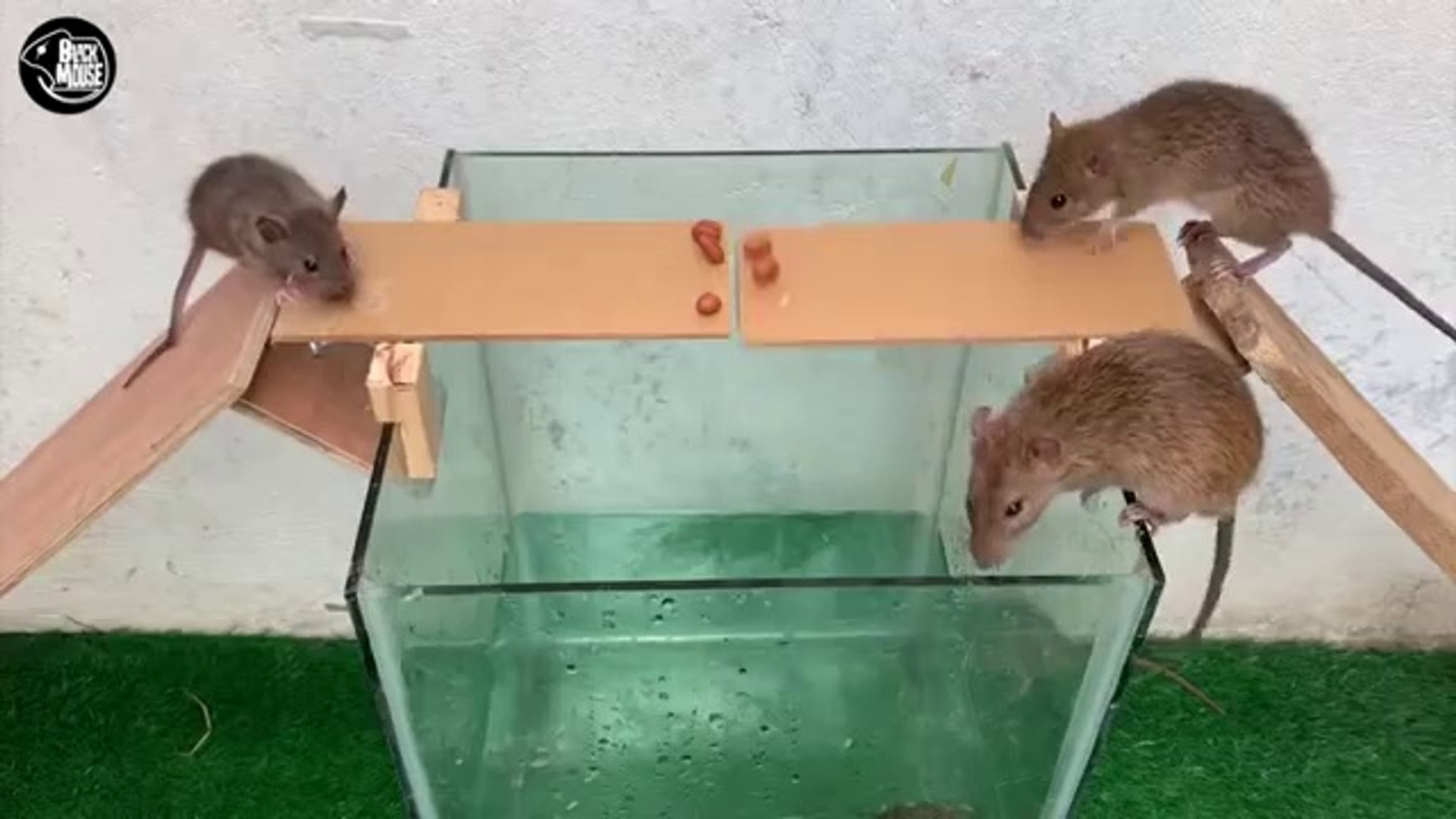 Rat Trap Water  12 Mice in trapped 1 Hour  Mouse_ Rat trap  How to Make Rat Trap ---