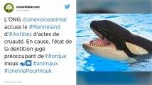 Alpes-Maritimes. L'orque Inouk est en grande souffrance selon One Voice, le parc Marineland se défend