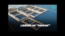 Cousteau obtient la libération de 100 cétacés en Russie