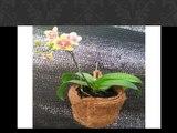 TERLARIS 0819-1504-4088, pot sabut kelapa JAKARTA, pot dari sabut kelapa
