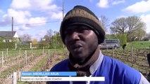 Réfugiés, ils apprennent les métiers de la vigne