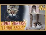 고양이 실버타운, 나비야 보호소 [식빵굽는 고양이] 9회