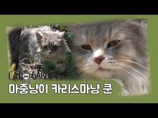카리스마냥 '쿤' [고양이정원] 2회
