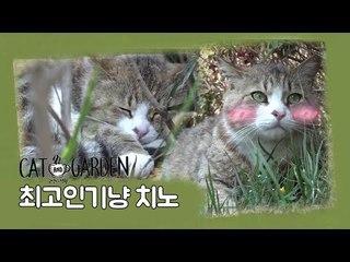 최고 인기냥 '치노' [고양이정원] 3회