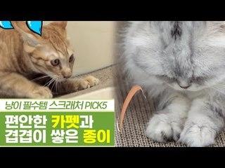 사전검증, 카펫 스크래처 & 종이 스크래처 [펫과사전] 12회