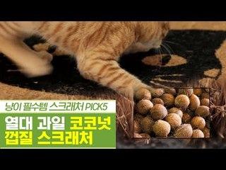 열대 과일 신박템, 코코넛 껍질 스크래처 [펫과사전] 12회
