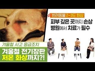 겨울철 필수템 전기장판으로 화상까지?! [펫과사전] 12회