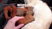 Des bébés écureuils viennent boire le lait d'une maman chien. Trop mignon