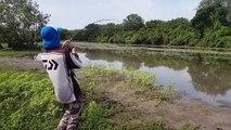 Un  pêcheur se fait voler sa prise par un crocodile qui le course