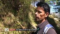 Himalaya : des morilles sur le toit du monde