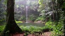 African kora With Sound Of nature, kora  Africaine avec son de la nature  kora africana con sonido de la naturaleza
