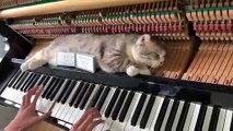 Non ce chat n'est pas mort... il ne réagit pas au piano joué sur lequel il est allongé !