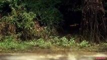 Buffalo fights back to Lion & kills it - Wildebeest escape from Hyena hunting | Cheetah vs Crocodile