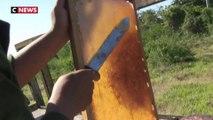 Cuba : les frères Fundora, rois de l'apiculture