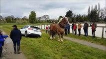 Quand un cheval remorque une voiture piégée dans un fossé