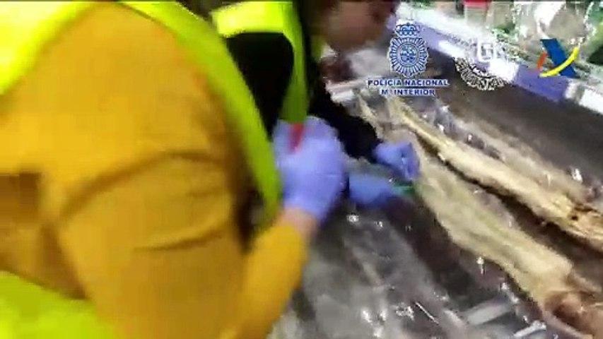 Tráfico ilegal de especies: Inmovilizados en Madrid más de 500 kilos de anguila China