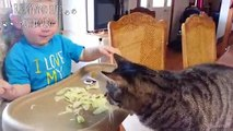 Baby and Cat Fun and Fails Cute Babies and Pets Compilation