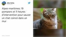 Alpes-Maritimes. Des pompiers mobilisés pendant 11 heures pour sauver un chat