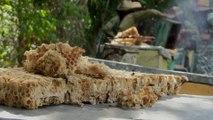 À Cuba, ces abeilles butinent dans un environnement sans pesticides
