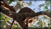 Wild Life of Madagascar The Earth of The fossa  And  The lemurs , Madagascar  la Tierra del fossa y el lemur