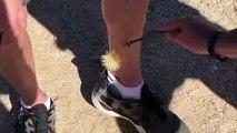 Un cactus qui est bien décidé à rester planté dans les jambes