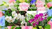 BERKUALITAS ..! HP/WA*082-220-228-118, Jual pupuk untuk anggrek bulan Bandung, Harga pupuk anggrek growmore Bandung Barat