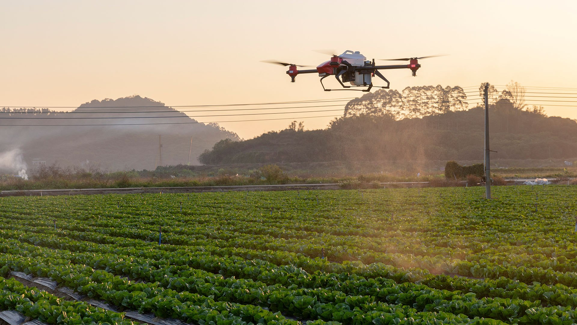 Pesticide-spraying drones rise to challenge of China's 'intelligent  agriculture' ambition