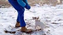 Ce chien devient fou en cherchant une balle.. en neige !