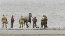 Sauvetage d'un cheval coincé dans la boue