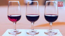 Beaujolais nouveau : comment élabore t-on du vin en quelques semaines ?