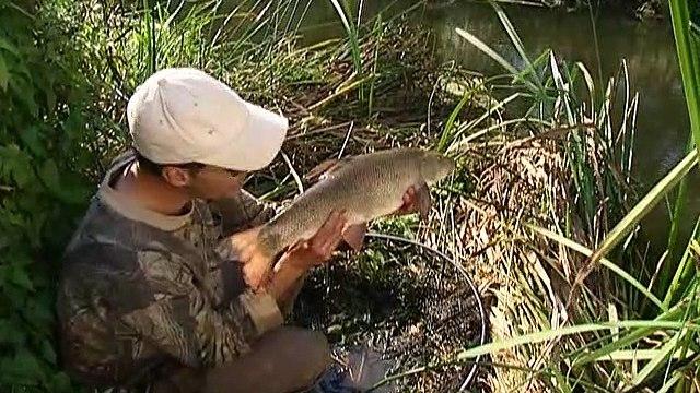record breaking fish mirror carp barbel & pike Part 2 of 2