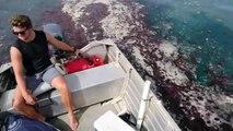 Ils croisent des milliers de méduses en bateau