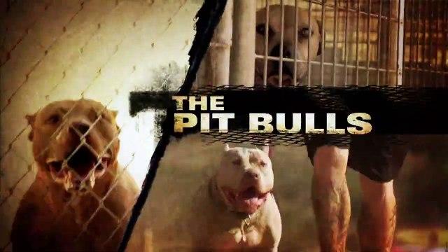 Pit Bulls And Parolees S03E08